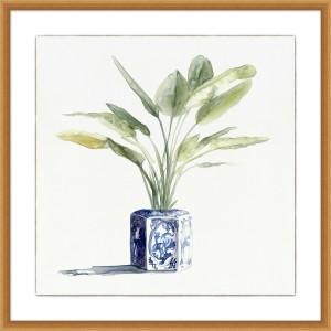 Square Ginger Urn Plant 2
